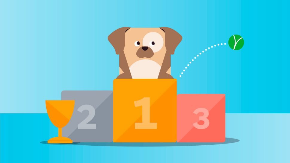 Best Pet Insurance Sydney 5