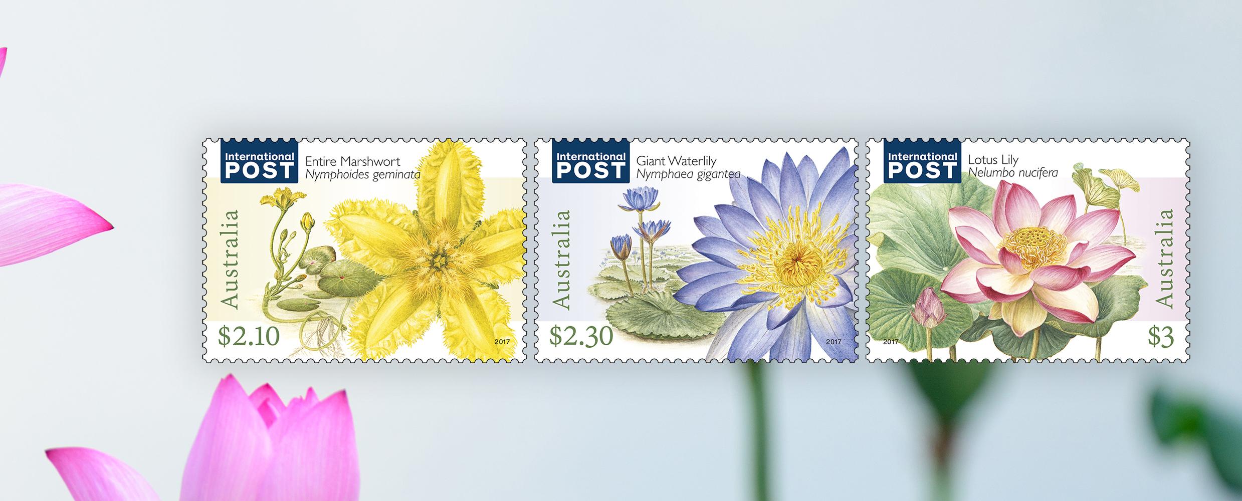 Jenny Phillips On The Art Of Botanical Illustration Australia Post