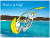 Bugs Bunny windsurfing, Noosa National Park Queensland product photo Internal 1 THUMBNAIL