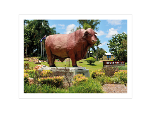 Rockhampton Bull Statue postcard product photo