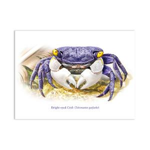 Christmas Island Bright-eyed crab postcard product photo