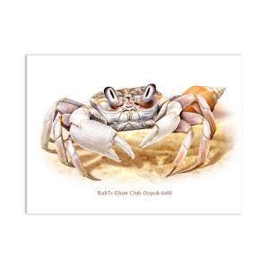 Christmas Island Kuhl's ghost crab postcard product photo