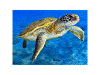 500 piece Ocean Turtle jigsaw puzzle product photo Internal 2 THUMBNAIL