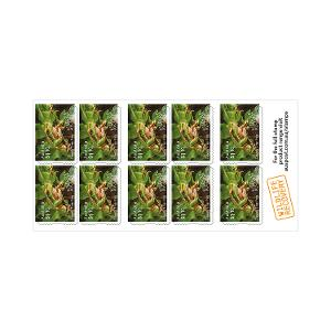 Chequebook of 20 x 10 x $1.10 Davies' Tree Frog stamps product photo