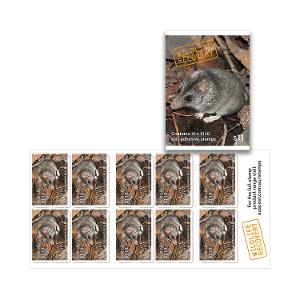 Booklet of 10 x $1.10 Kangaroo Island Dunnart stamps product photo