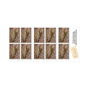 Chequebook of 20 x 10 x $1.10 Blue Mountains Water Skink stamps product photo